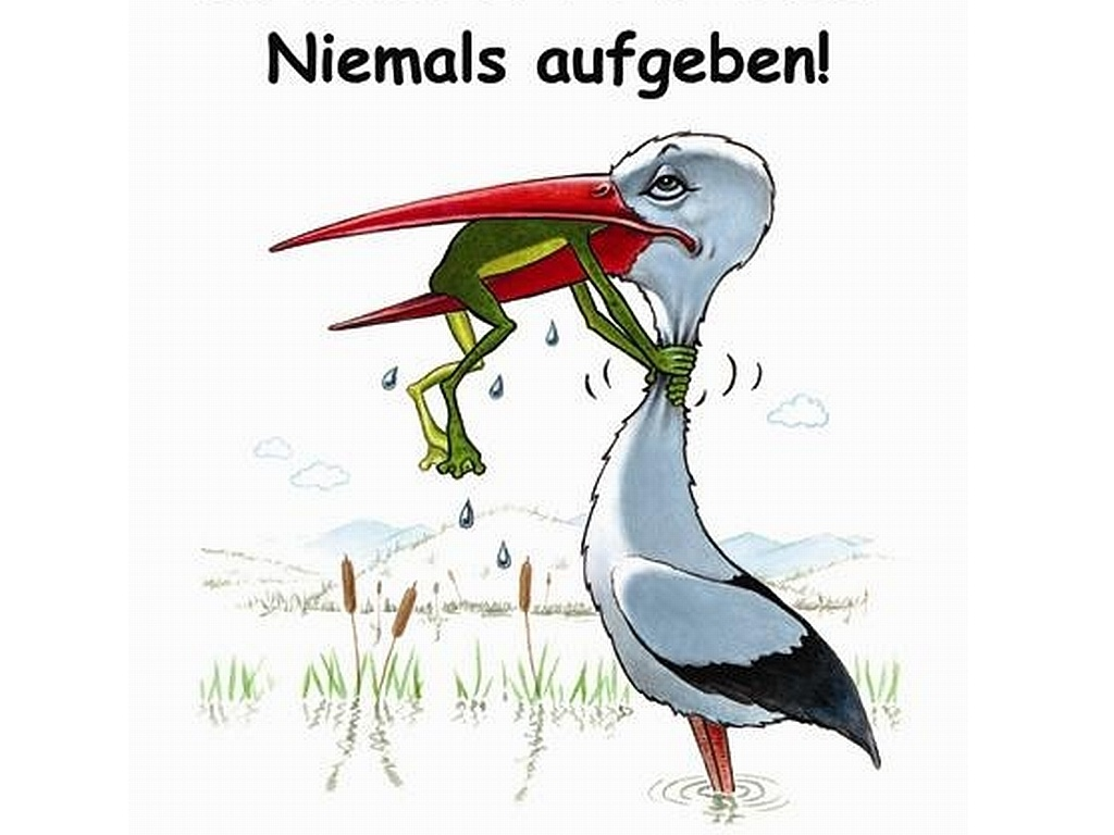 Niemals aufgeben stellinchen - Frosch auf englisch ...